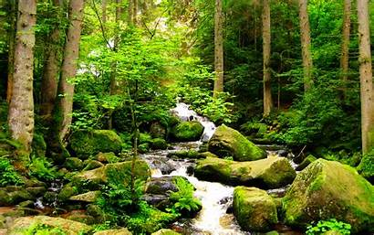 Stream Forest Nature Wallpapers Wallpapersafari Ebooks Landscapes