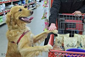 5 ways to help a shelter with tractor supply