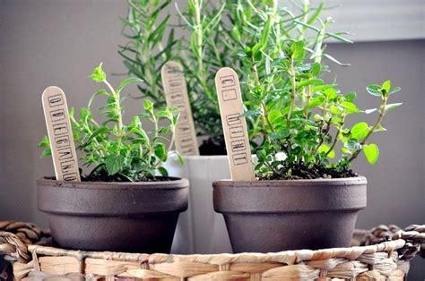 herbes aromatiques en cuisine herbes aromatiques en pot la déco maison idéale