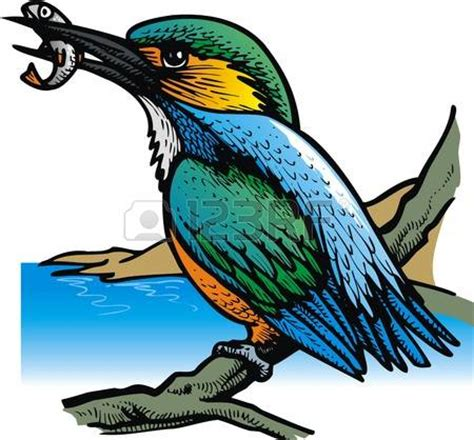 river kingfishers clipart clipground