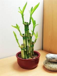 Bambus Pflege In Der Vase : 7 pflegeleichte zimmerpflanzen die wenig licht brauchen ~ Lizthompson.info Haus und Dekorationen