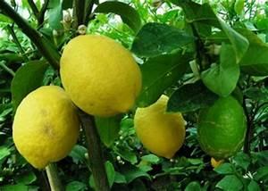 Protection Arbres Fruitiers : protection des fruitiers et l gumes contre le gel ~ Premium-room.com Idées de Décoration