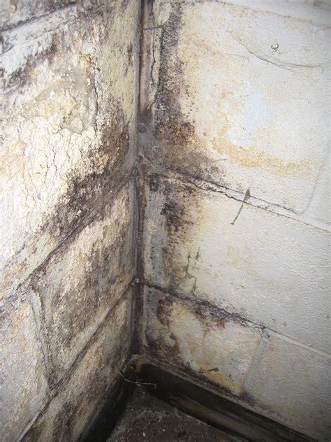 Black Mold Concrete Basement Walls Basement