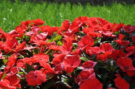 immagini prato fiorito prato fiorito foto immagini piante fiori e funghi