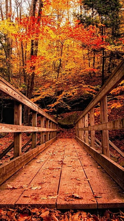 Autumn Themed Wallpapers For Android by Image For Wood Bridge In Autumn Forest Hd Wallpaper