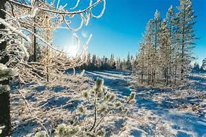 Bäume Umpflanzen Jahreszeit : kostenloses foto zum thema b ume drau en jahreszeit ~ Orissabook.com Haus und Dekorationen