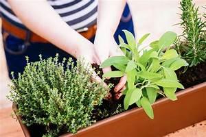 Kräuter Zusammen Pflanzen : kr utergarten auf dem balkon anlegen jumbo youdoo ~ Whattoseeinmadrid.com Haus und Dekorationen