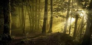 sunrise, , sunbeams, , forest, , path, , trees, , mist, , sunlight