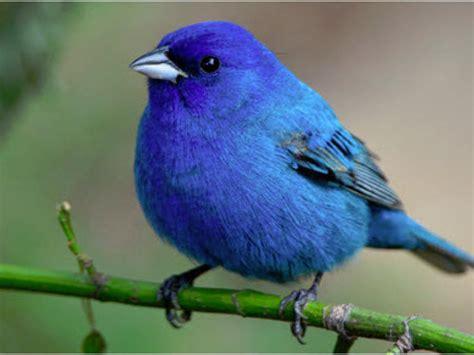 bluebirds gene therapy  firing   cylinders nasdaq