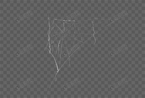spider web png imagepicture
