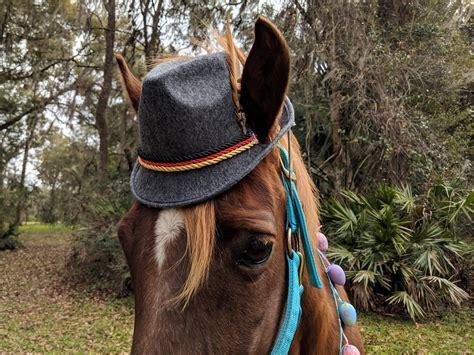 gray felt fedora hat  small horse pony  miniature