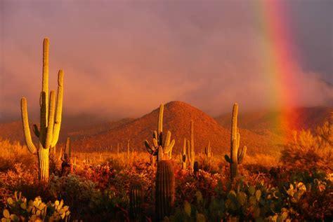 Saguaro Nationalpark In Arizona