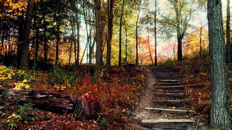 steps deep forest wallpapers hd wallpapers id