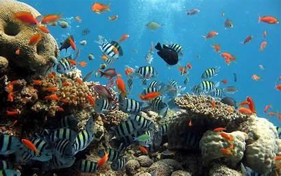 Sea Under Wallpapers Ocean Desktop Computer Fish