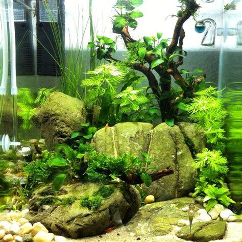 fish tank aquascaping 30l cube aquascaping aquariums and aquascaping