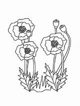 Poppy Coloring Pages Flower Poppies Printable Carnation Flowers Veteran Veterans Sheets Blank Template Coloringpages101 Recommended Getcolorings Holidays Popular Mycoloring sketch template
