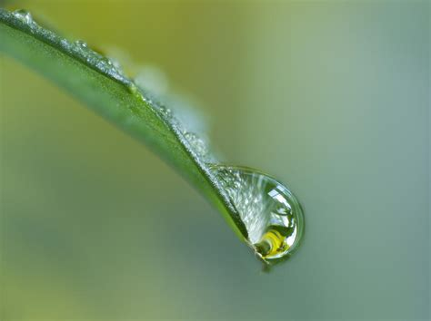 up of water drop on leaf photograph by darwin wiggett