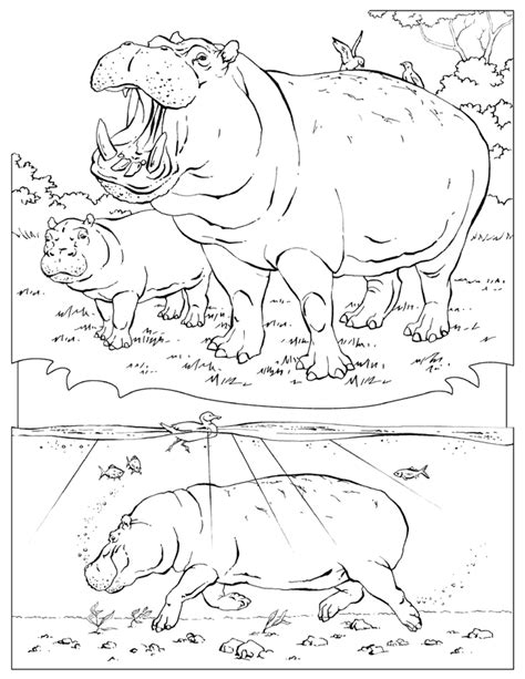 national geographic coloring pages coloring home