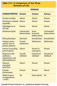 Types Of Rna Chart Prokaryotes