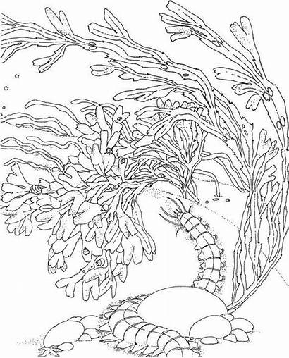 Coloring Pages Coral Ocean Reef Sea Drawing