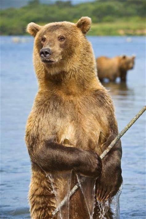 Cute Russian Bears (29 pics) - Izismile.com