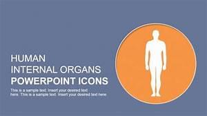 Human Body Powerpoint Templates