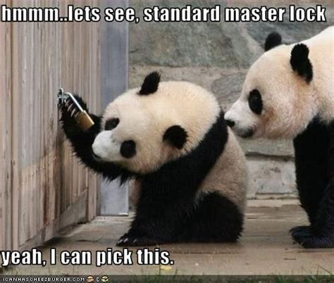 Cute Panda Memes - 21 best panda memes images on pinterest funny pics funny stuff and ha ha