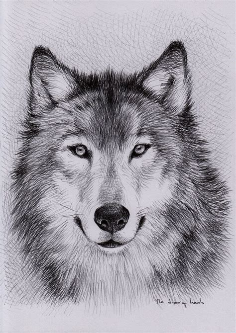 unique wolf drawings google search art pinterest