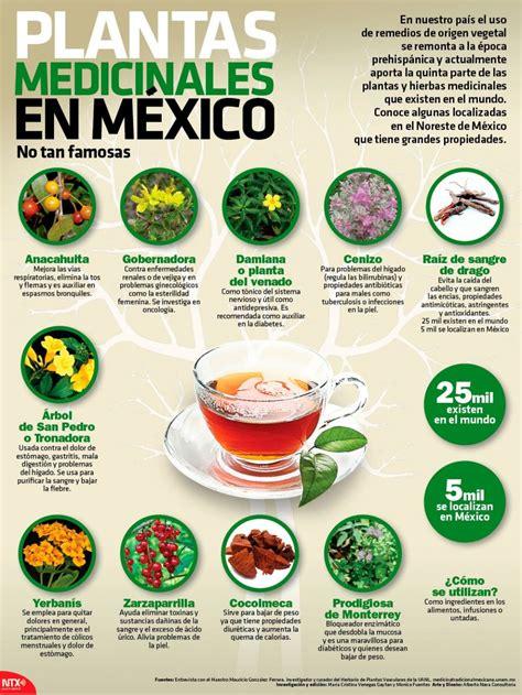 Plantas Medicinales Poco Conocidas De Mexico Remedies