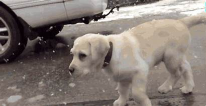 Snow Puppy Seeing Playing Play Floppy Squee