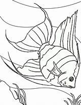 Fish Coloring Angel Floor Sea Dive Into Pages Coloringsky Colouring Drawings Drawing Sheets Water Sky Fische Gemerkt Von sketch template