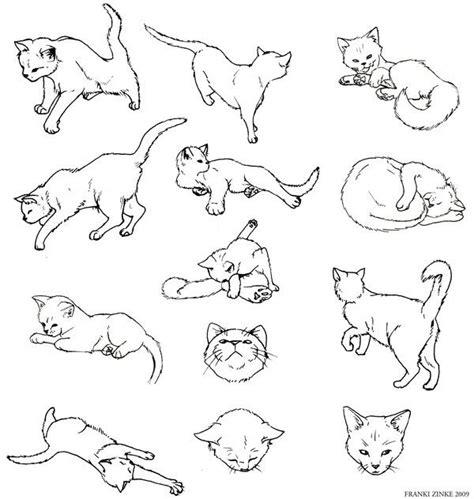 cat study  frankizinke  deviantart inspiration