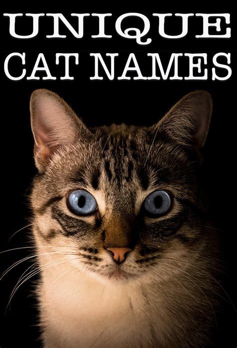 unique cat names 28 images best 25 unique cat names ideas on cat names