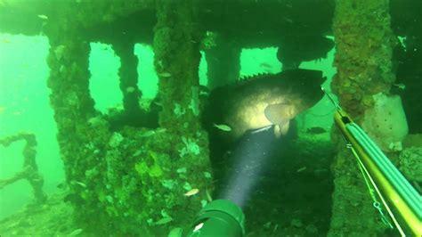 panacea fl spearfishing grouper cobia shipwrecks sharks gag goliath