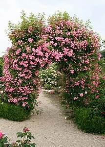 Rosen Für Rosenbogen : rosen fuer rosenbogen kletterrosen rosen rosen online kaufen im rosenhof schultheis ~ Orissabook.com Haus und Dekorationen