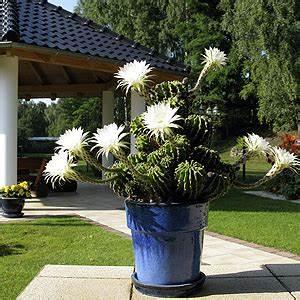 Rankpflanzen Winterhart Immergrün : dachterrasse pflanzen winterhart pflanzen f r nassen boden ~ A.2002-acura-tl-radio.info Haus und Dekorationen