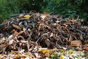 Igel Im Garten : igel beim berwintern im garten helfen so sch tzen sie ihn ~ Lizthompson.info Haus und Dekorationen