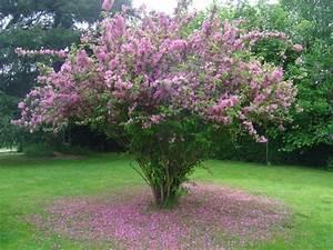 Petit Arbuste Fleuri : fonds d 39 cran nature fonds d 39 cran plantes arbustes ~ Premium-room.com Idées de Décoration