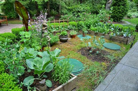 is it safe to plant a garden a septic field