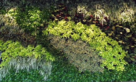 preserved flowers interior and exterior artificial green wall plantings