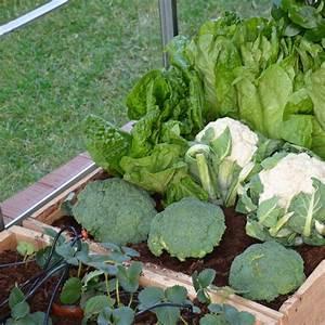 Kit Serre De Jardin : kit d 39 irrigation goutte goutte pour serre de jardin palram ~ Premium-room.com Idées de Décoration