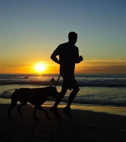 Dog Running Run Exercise Beach Jolla Shore