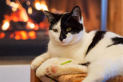 cat dangerous cats fireplace places kitty happy front