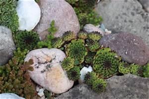 Hang Steine Richtig Setzen : steingarten anlegen gestaltung und bepflanzung ~ Whattoseeinmadrid.com Haus und Dekorationen