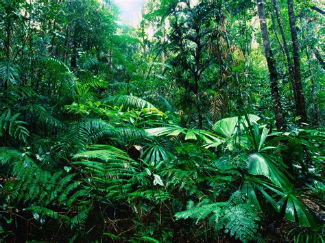 Earth Floor Biomes Tropical Rainforest by World Visits Tropical Rainforests Green Plants On The Earth