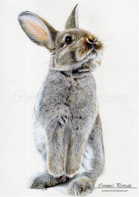 Rabbit Drawing 17 Best Ideas About Rabbit Drawing On Pinterest Bunny