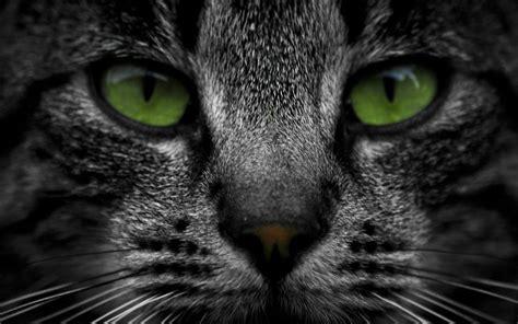Cat Green Eyes Wallpaper  2560x1600  39883 Wallpaperup