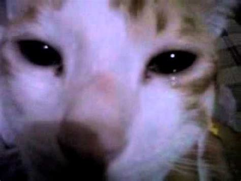 can cats cry my cat afield crying feline with tears in her eye youtube