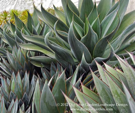 succulents  companion plants modern landscape san