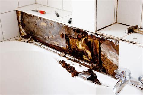 reasons    mold   bathroomand